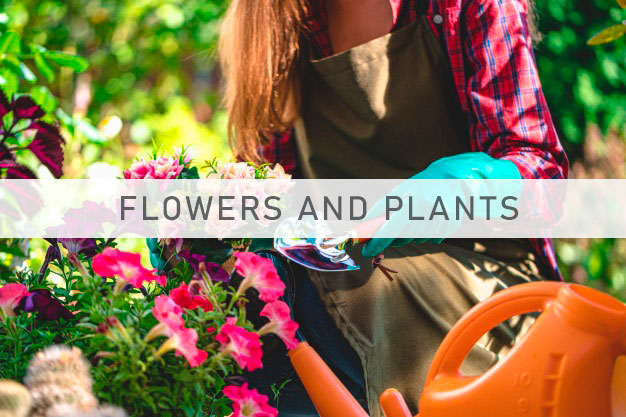 Impact for the floriculture sector