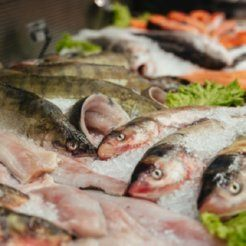 Air Purifiers for Fishmongers