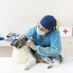Air purifiers for veterinary centers